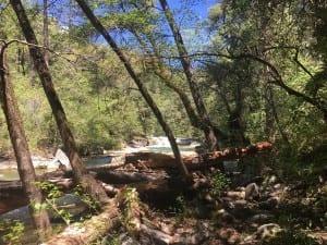 Feather Falls Log Jam Fall River May 2017 Barebackpacking